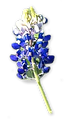 bluebonnet-2 copy.png