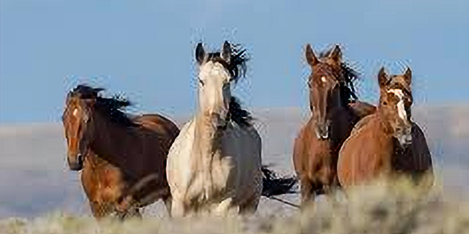 The Mustang Open Freestyle Monroe WA