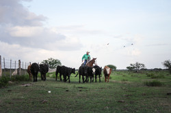 Van Hargis Horsemanship