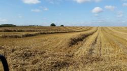 Wheat Combine