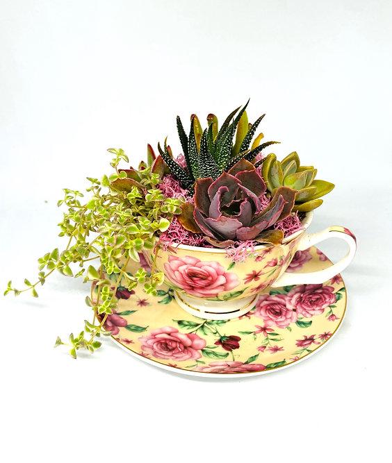 SolMateo Spirited DIY Tea Cup