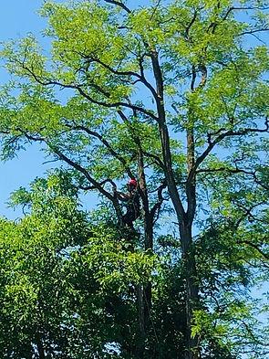 Baumpflege_1.jpg