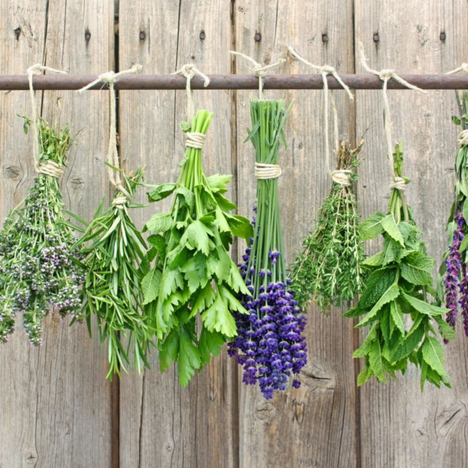Speaking of drying our own herbs...