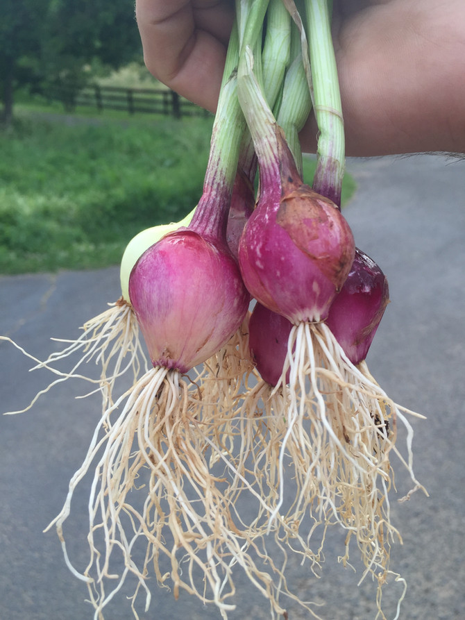 Onions just don't get the credit they deserve!