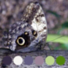 #27CL_butterfly_slightlyeverything novo.
