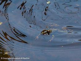grenouille arboretum limousin