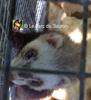 furet2-ParcduTouron.jpg