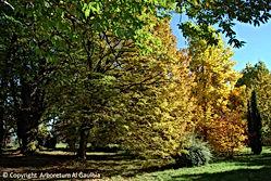 Arboretum Al Gaulhia - le bois ;arboretum Limousin