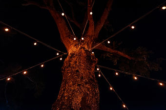CTH Lights