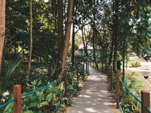 Park Connector Southern Ridges Singapore HortPark Alexandra Henderson Waves walking guide