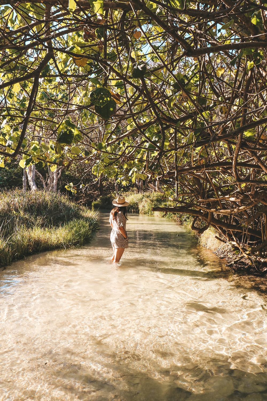 Eli Creek, Fraser Island, Queensland