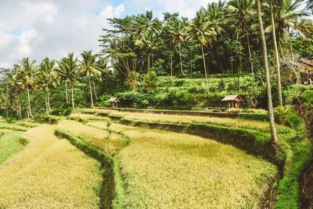 Gunung Kawi Temple Ubud Bali travel guide rice terraces