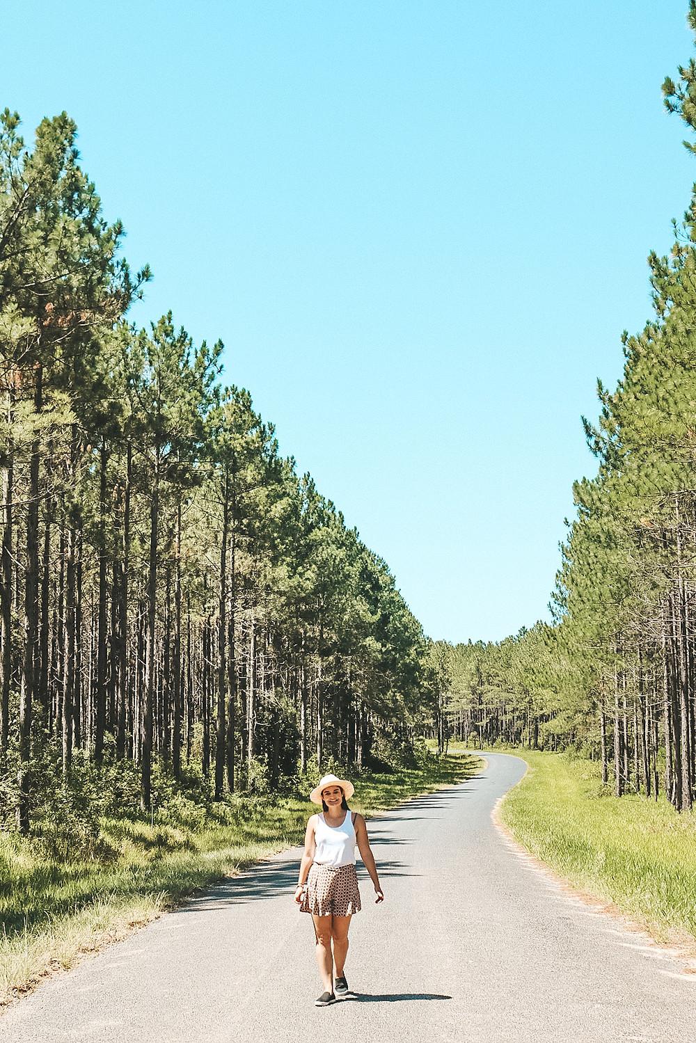 Pine Trees along Wild Horse Mountain Road Sunshine Coast