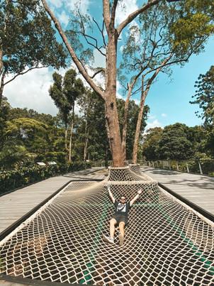 Singapore Botanic gardens Learning Forest