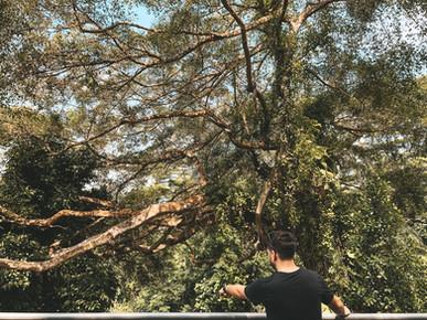 Alexandra garden trail canopy walk southern ridges singapore