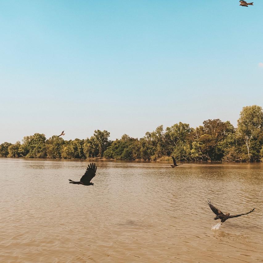 Jumping crocodile cruises Darwin birds