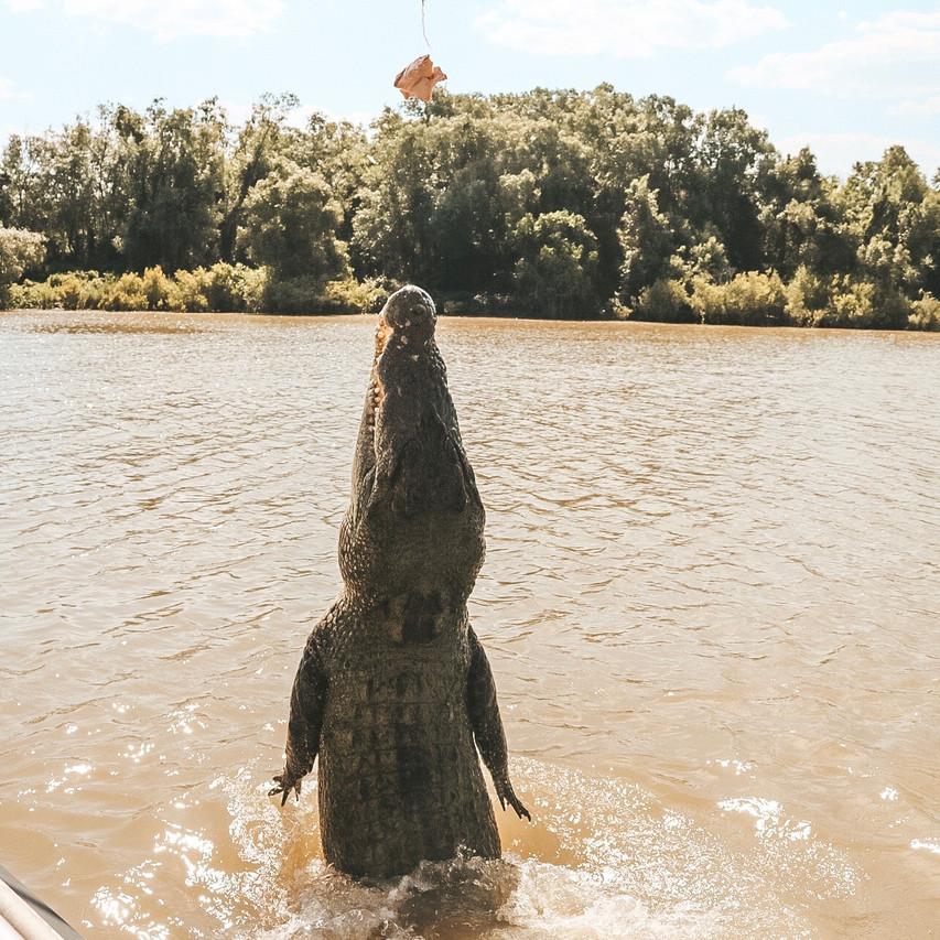 Jumping crocodile cruises Darwin
