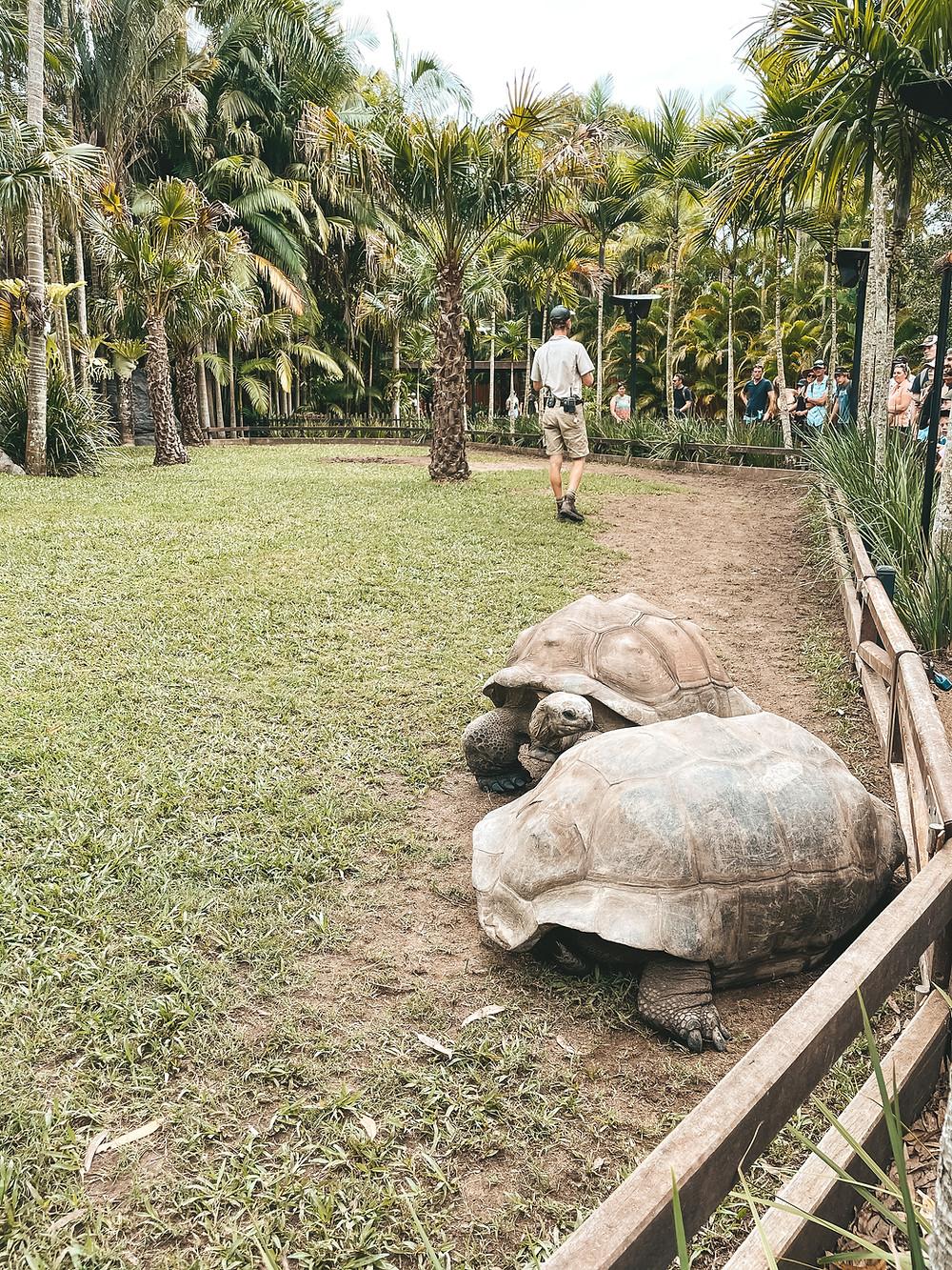 Aldabra Tortoise Feeding Show, Australia Zoo