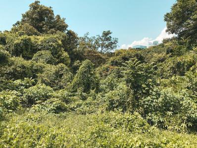 Singapore greenway green corridor national park walk jungle