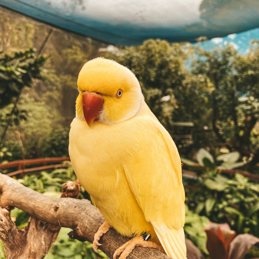 Bird World, Kuranda Village and Rainforest, Cairns QLD