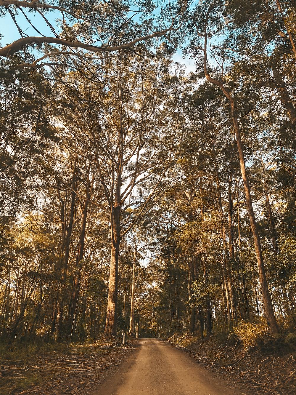 Road to reach the Mt Tinbeerwah Carpark, Noosa
