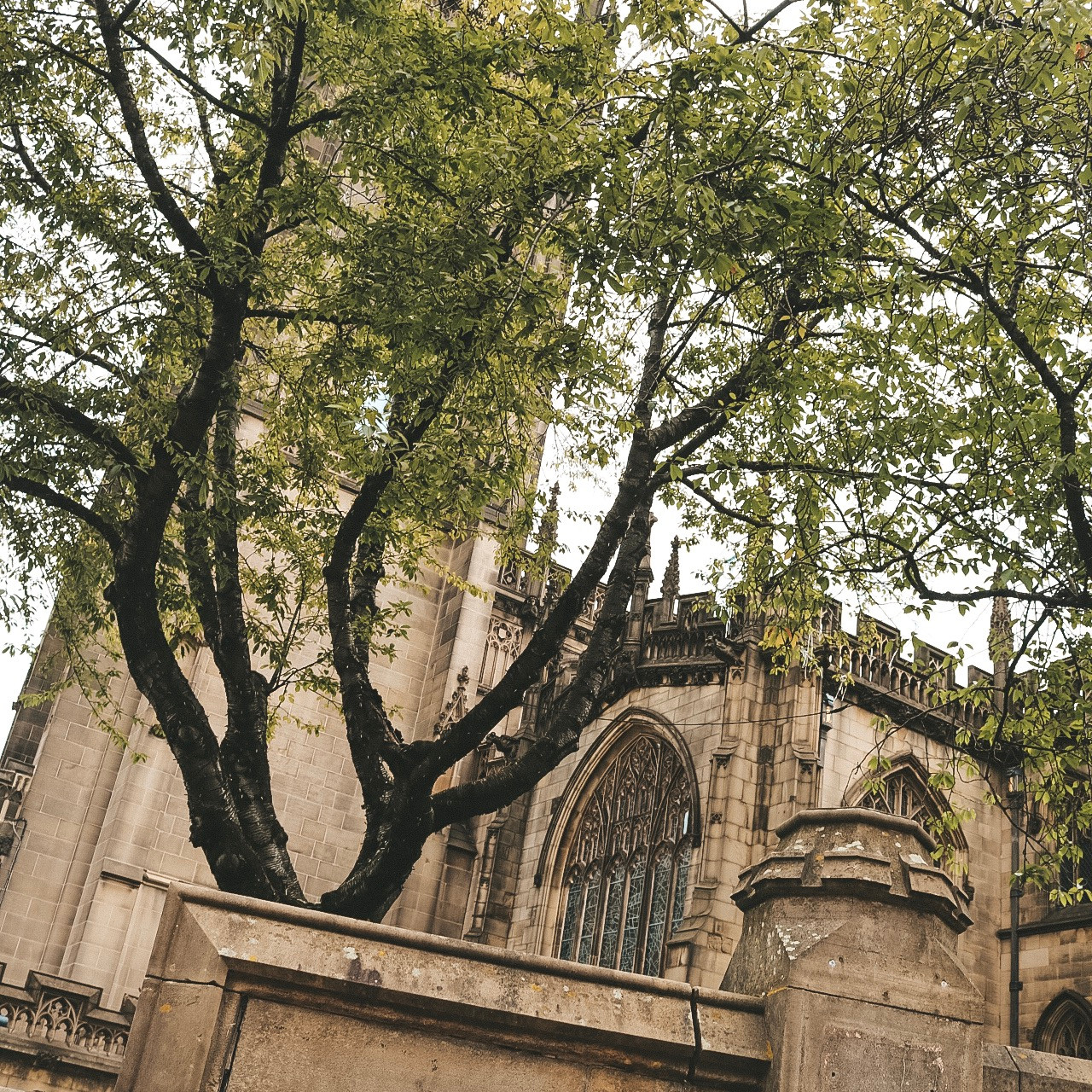 Manchester cathedral coutryard trees