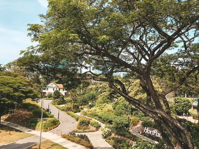 Alexandra Garden Trail canopy treetop walk southern ridges singapore walking guide HortPark