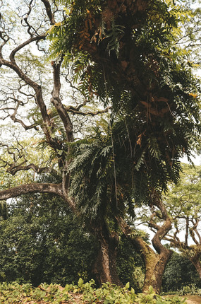 Fort Canning Park fort gate entrance singapore national parks guide