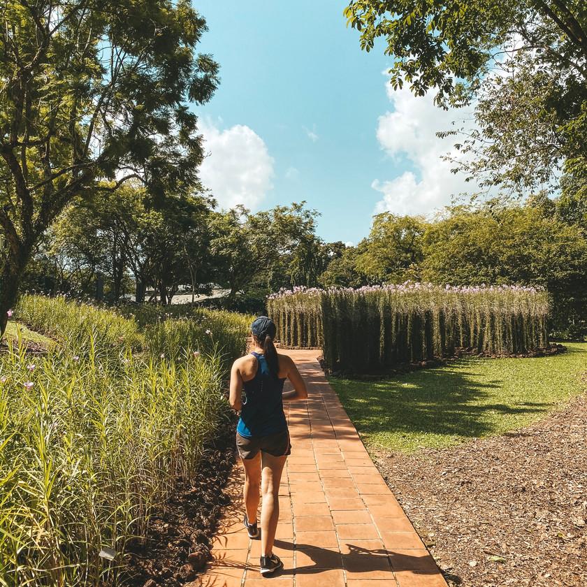 Singapore Botanic Gardens Vanda Miss Joaquim display