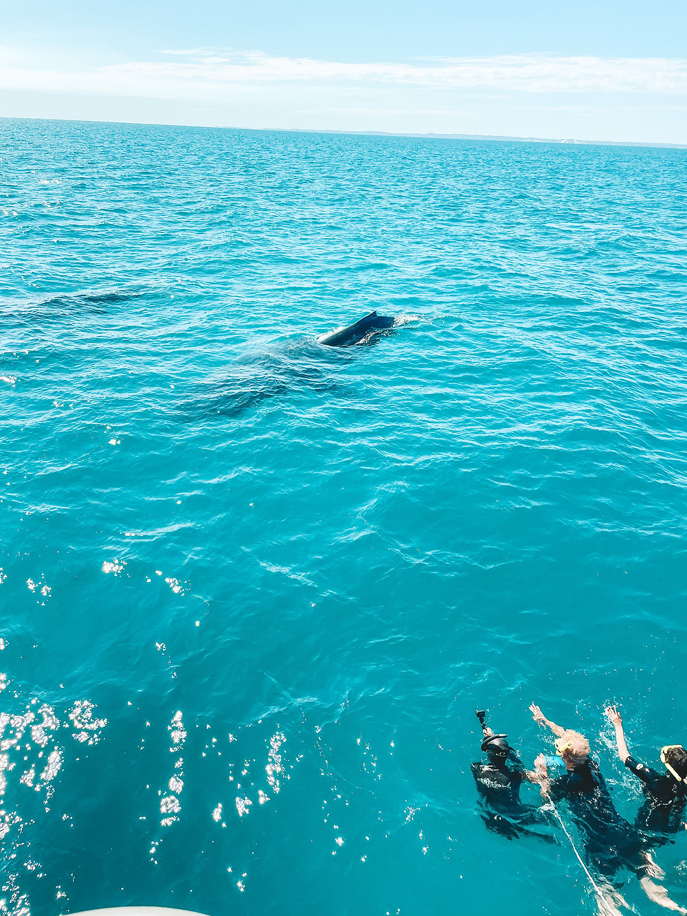 Swimming with the Humpback Whales Encounter - Tasman Ventures Remote Fraser Island tour