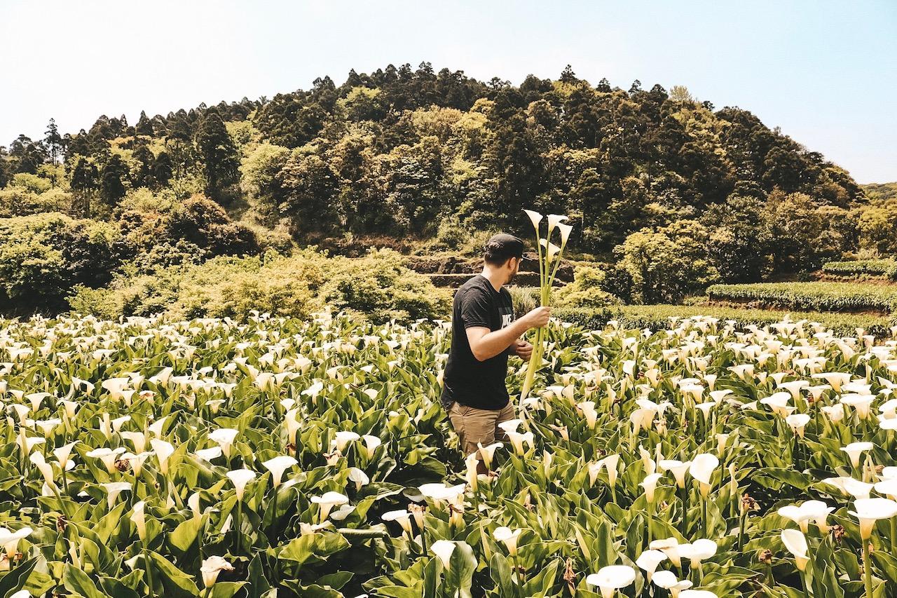 Yangmingshan National Park Taipei Taiwan flower festival Japanese Lilly