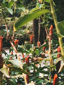 HortPark Floral walk flowers southern ridges singapore humming bird flowers