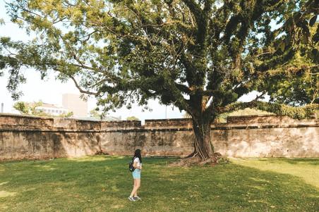 Fort Cornwallis tree
