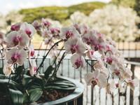HortPark Southern Ridges walk Singapore orchids