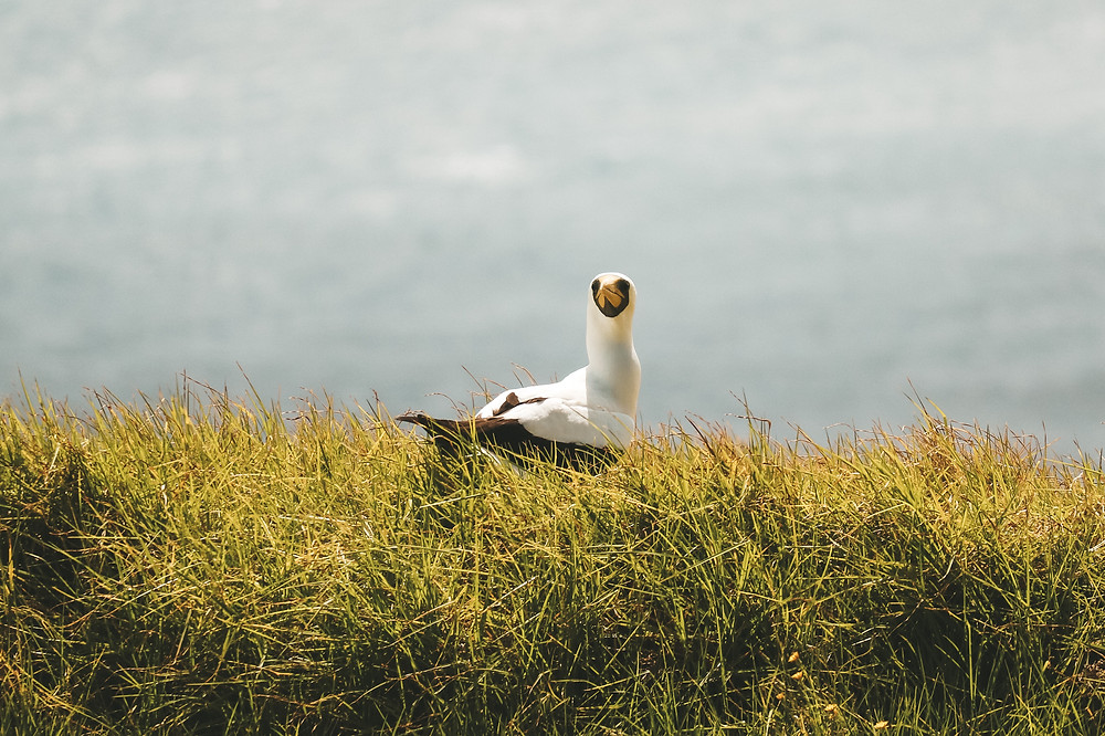 Norfolk Island Seabirds: Be sure to visit in the summer time for their breeding season
