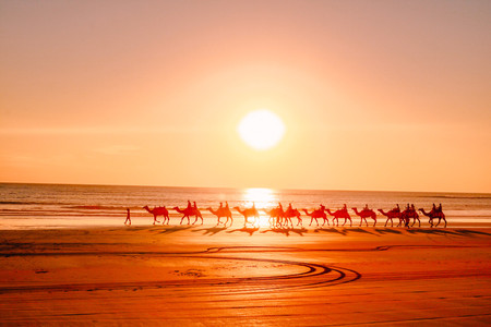 Red Sun Camels Sunset Camel ride cable beach Broome
