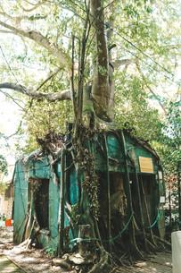 Penang War Museum Malaysia jungle