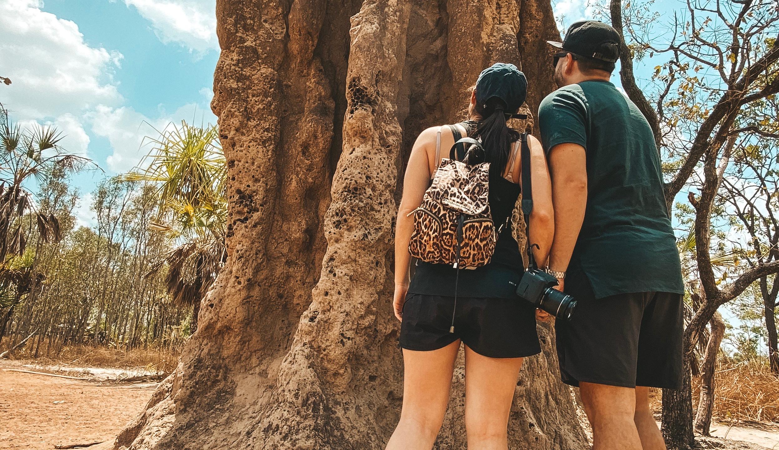 termite mound litchfield national park
