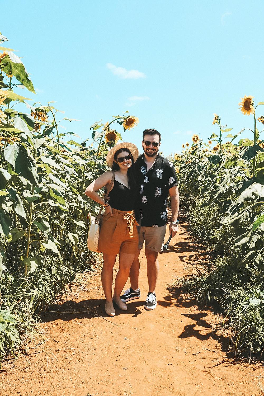 Farm and co kingscliff sunflowers