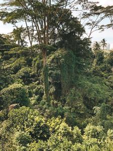 Alexandra Garden Trail canopy treetop walk southern ridges singapore walking guide