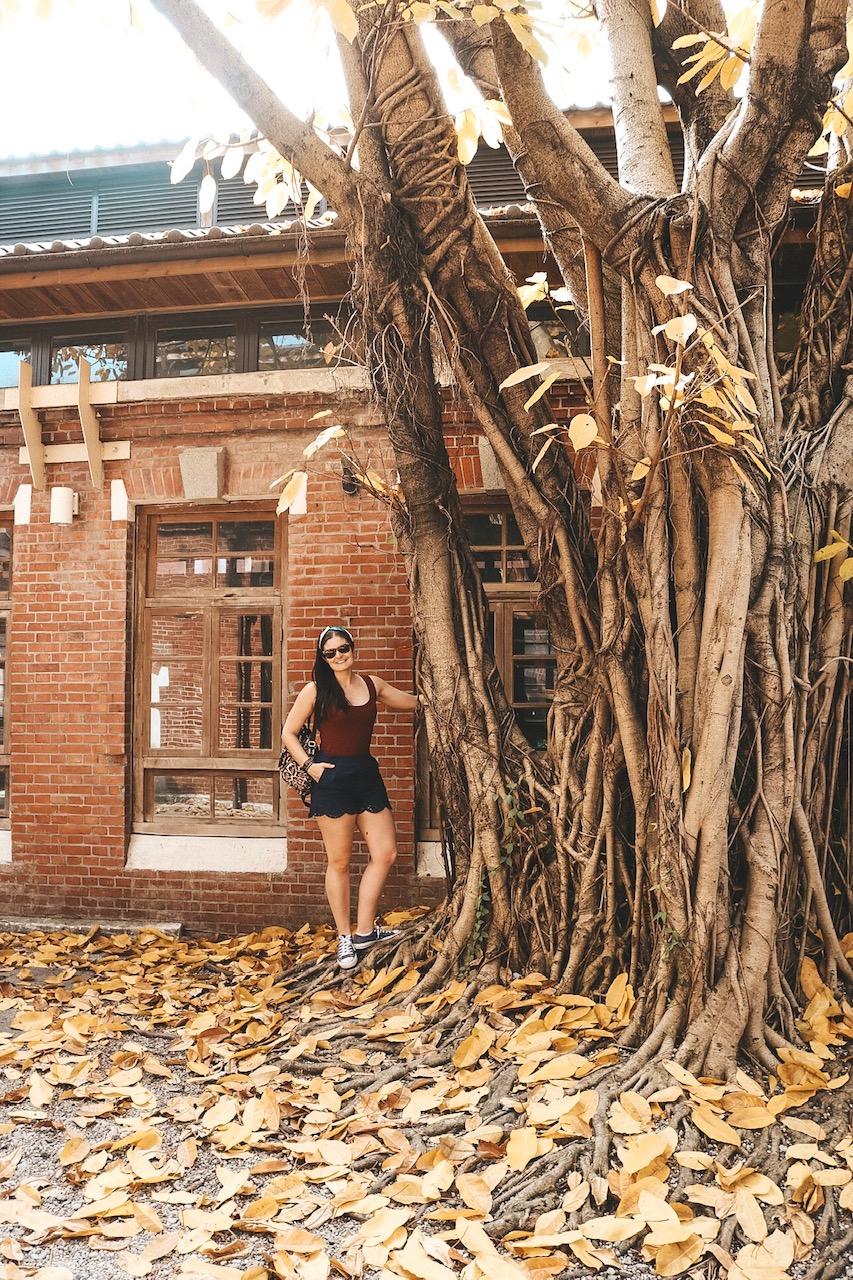 Huashan Creative Park taipei Taiwan tree