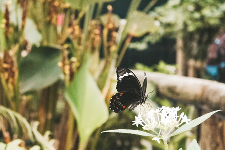 Australian Butterfly sanctuary Kuranda village rainforest queensland