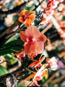 Singapore National Orchid Garden botanic gardens