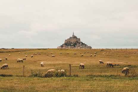 Mont Saint Michel Normandy France countryside sheep