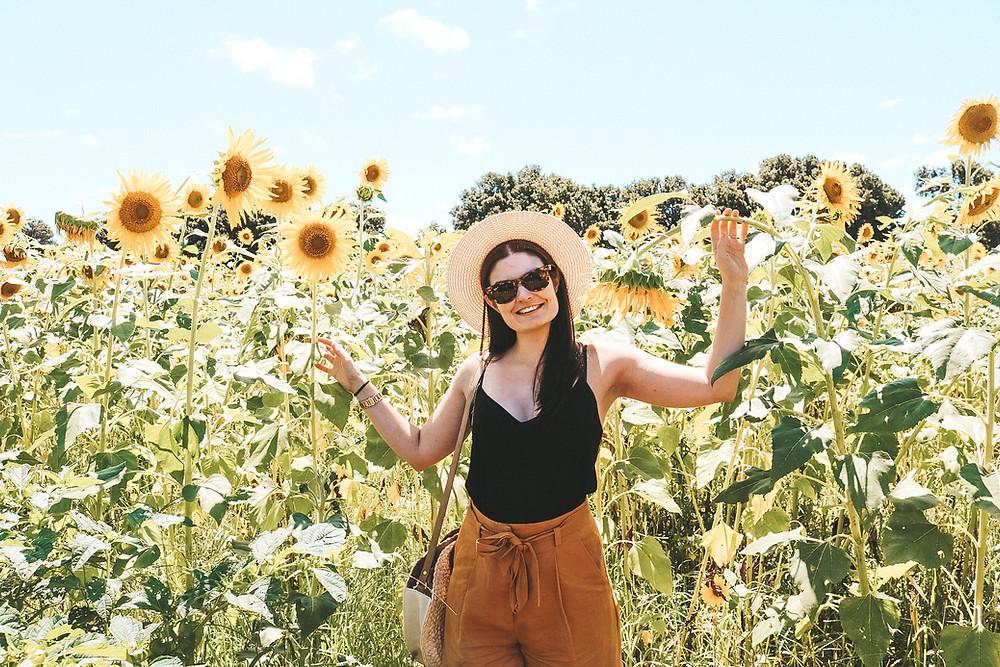 Sunflower field Farm and co kingscliff