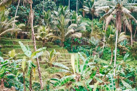 Gunung Kawi Temple Ubud Bali travel guide rice paddies