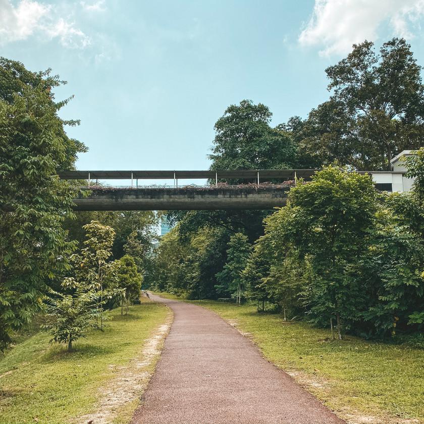 Green corridor greenway walking trail singapore