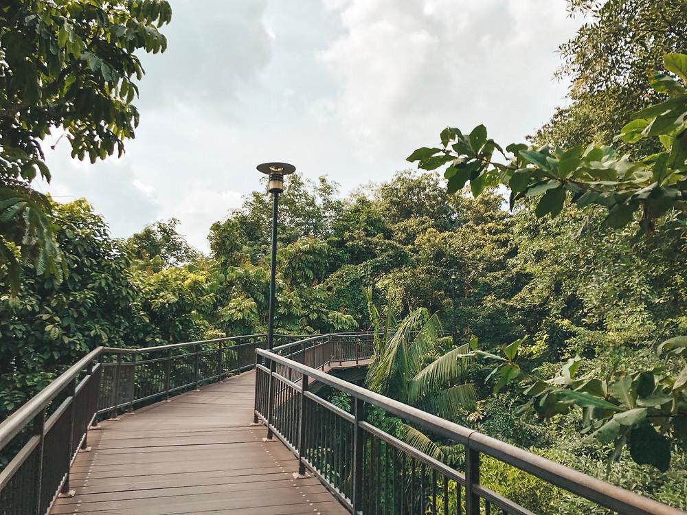Kent Ridge Park Southern Ridges Singapore canopy walk