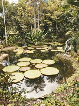 Singapore Botanic Gardens shaw symphony stage lake