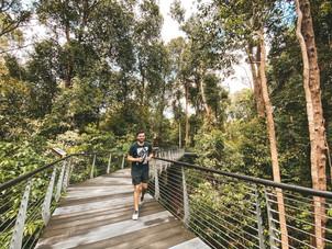 Singapore Botanic gardens Learning Forest bridge